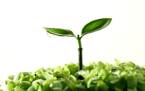 FreeGreatPicture.com-8021-sprouts-leaves