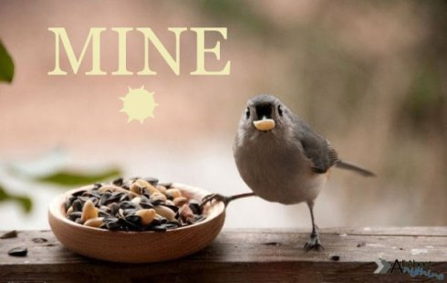 funny-mine-food-bird-claw