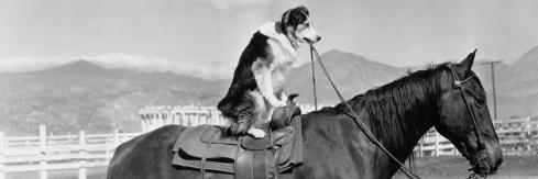 dog_horse